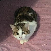 Adopt A Pet :: Jolie - Sistersville, WV