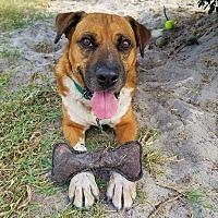 Adopt A Pet :: Remi - Umatilla, FL