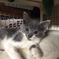 Adopt A Pet :: Chrissy - San Jose, CA
