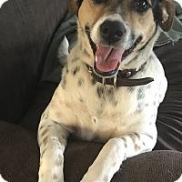 Adopt A Pet :: Alley adoption fee $100 - Redding, CA