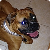 Adopt A Pet :: Gunner - Central & West Florida, FL