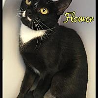 Adopt A Pet :: Flower - 379 (313) / 2017 - Maumelle, AR