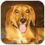 Photo 1 - Beagle Mix Dog for adoption in Osseo, Minnesota - Jenny