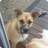 Adopt A Pet :: Ami - Linton, IN