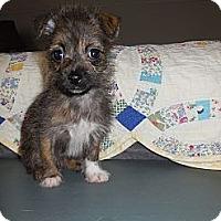 Adopt A Pet :: Ava - Hilliard, OH