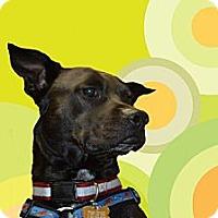Adopt A Pet :: MICKEY - Southampton, PA