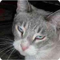 Adopt A Pet :: Yo Yo - Pasadena, CA