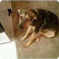 Adopt A Pet :: Reesie - Alliance, NE