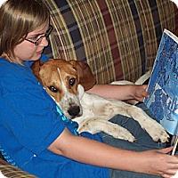 Adopt A Pet :: Reader - Toledo, OH
