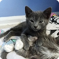 Adopt A Pet :: Doc - Bayonne, NJ