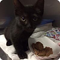 Adopt A Pet :: Carmen - Byron Center, MI
