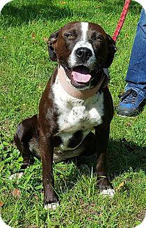 Boxer Mix Dog for adoption in Somonauk, Illinois - Lilly