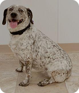 Australian Cattle Dog Mix Dog for adoption in Urbana, Ohio - Mila