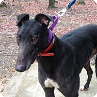 Adopt A Pet :: Walk Withme Stan - Gerrardstown, WV