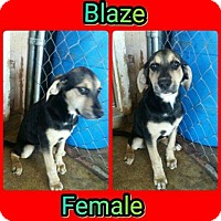 Adopt A Pet :: Blaze in CT - Manchester, CT