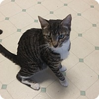 Adopt A Pet :: Ivy and kittens - Parkton, NC
