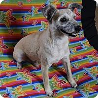 Adopt A Pet :: Robbie - Rosalia, KS