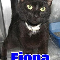Adopt A Pet :: #67 Fiona - Lawrenceburg, KY