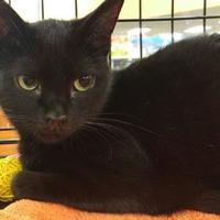 Adopt A Pet :: HANA - Powder Springs, GA