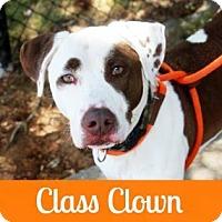 Adopt A Pet :: Ethan - Atlanta, GA