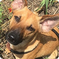 Adopt A Pet :: Buster - Fort Worth, TX
