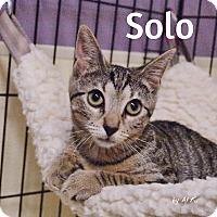 Adopt A Pet :: Solo - Ocean City, NJ
