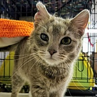 Adopt A Pet :: Andy - Sheridan, WY