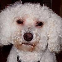 Adopt A Pet :: Duncan - La Costa, CA