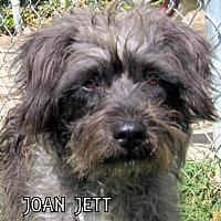 Adopt A Pet :: Joan Jett - Lindsay, CA