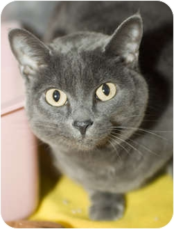 Domestic Shorthair Cat for adoption in Tangent, Oregon - LeeLou