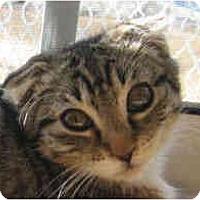Adopt A Pet :: Lorna Doone - Davis, CA