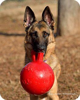German Shepherd Dog Dog for adoption in Dacula, Georgia - Layla