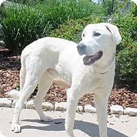Adopt A Pet :: Perry - Cincinnati, OH