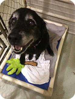 Labrador Retriever Mix Dog for adoption in Waynesboro, Tennessee - Molly