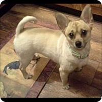 Adopt A Pet :: Gracie - Greenville, RI