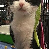 Adopt A Pet :: Julie - Bear, DE