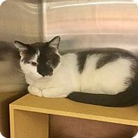 Adopt A Pet :: Quigley - Adoption Pending! - Colmar, PA