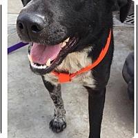 Adopt A Pet :: Mommy Perlita - El Cajon, CA