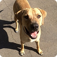 Adopt A Pet :: Hoss in CT - Manchester, CT