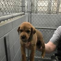 Adopt A Pet :: Jeb - Fairfax Station, VA