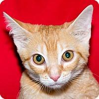 Adopt A Pet :: CIAO - Fernandina Beach, FL