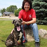 Adopt A Pet :: Tyson - Elyria, OH