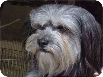 Terrier (Unknown Type, Medium) Mix Dog for adoption in Spring Valley, California - Kahlua