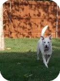 Australian Cattle Dog/Labrador Retriever Mix Dog for adoption in Coeburn, Virginia - Abby