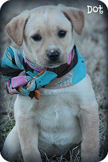Labrador Retriever Mix Puppy for adoption in Brattleboro, Vermont - Dot