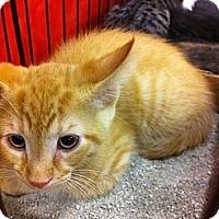 Adopt A Pet :: Bentley - Pittstown, NJ