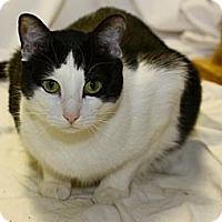 Adopt A Pet :: James - Lombard, IL