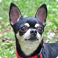 Adopt A Pet :: Tynichi - Mocksville, NC