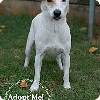 Adopt A Pet :: Hoover - Wisconsin Dells, WI