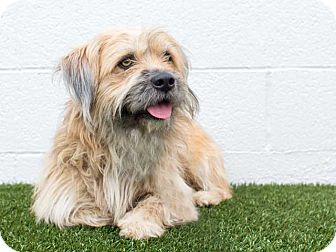 Terrier (Unknown Type, Medium) Mix Dog for adoption in Hawthorne, California - Crinkles